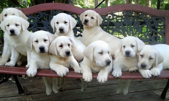 labs-bench